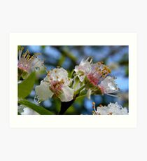 Natures Crystals - Plum Blossoms - NZ - Southland Art Print