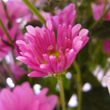 Fusha flowers by CrazyDimension