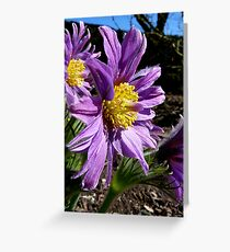 The Colour Lilac- Michaelmas Daisy - Southland Greeting Card