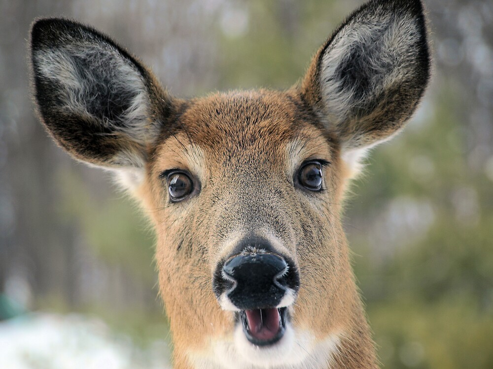 Faces of Deer Series #1 by JThill