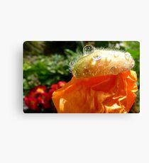 The Shower Cap - Orange Poppy - NZ - Southland Canvas Print