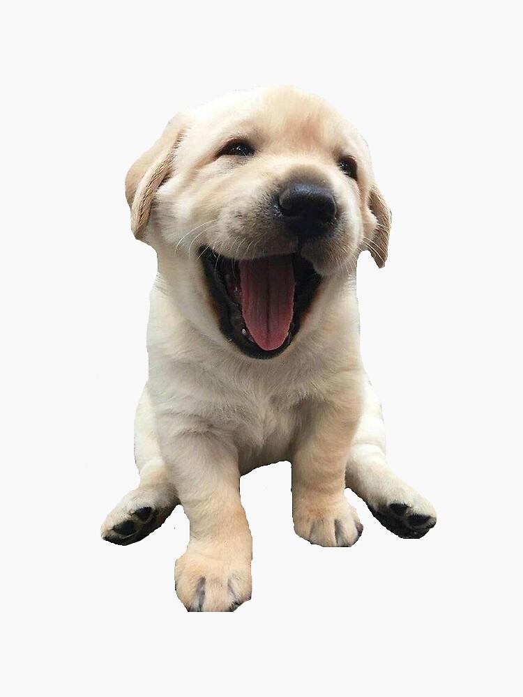 Welpe des goldenen Apportierhunds von xmandyycx3