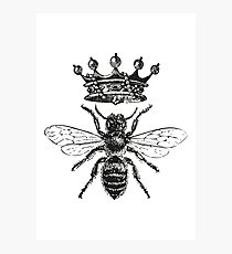 Queen Bee | Black and White Photographic Print