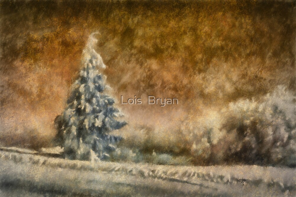 Winter Wonder by Lois  Bryan