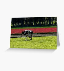 Grazing with Beauty! - Dairy Cow - NZ - Southland Greeting Card
