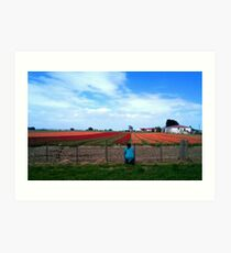 Field of Dreams! - Tulip Plantation - NZ - Southland Art Print