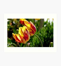 Lean to the left! - Tulips - NZ - Southland Art Print
