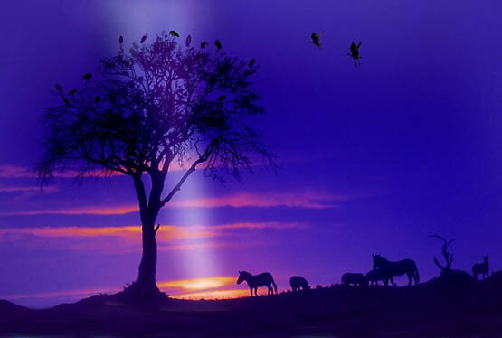 ZEBRAS AT SUN DOWN IN THE KALAHARI by POOPIE
