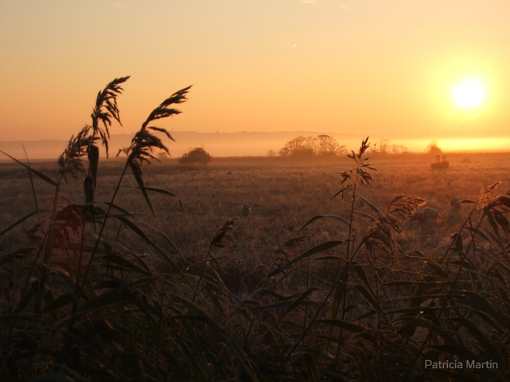 Mist on the Marsh - frosty morning by Patricia Martin