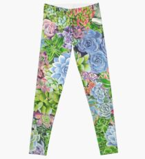 succulents! Leggings