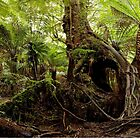 Rain Forest of Victoria by Mrtweety