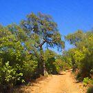 The Garrigue Trail by jean-louis bouzou