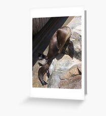 Mommy & Baby Seal Greeting Card