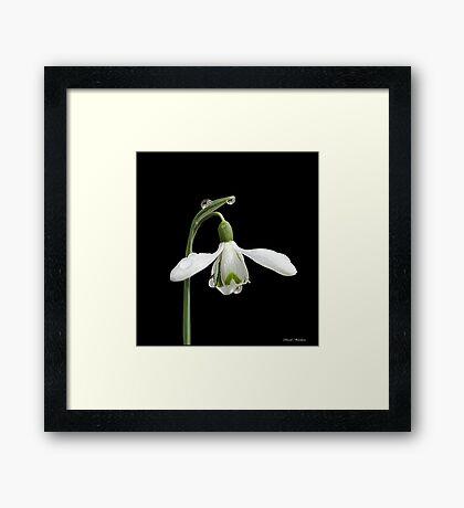Diamond Flower Framed Print