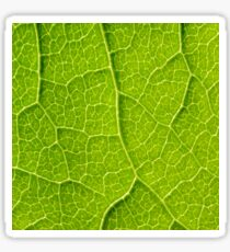 Green Leaf Texture With Visible Stomata Covering The Outer Epidermis Layer Sticker