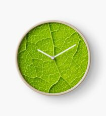 Green Leaf Texture With Visible Stomata Covering The Outer Epidermis Layer Clock
