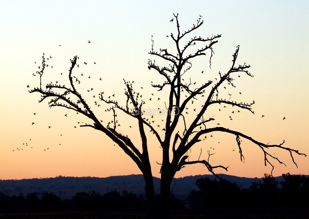 Tree silhouetted birds by SharonD