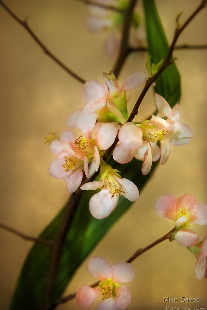 A touch of spring by Michael Savad