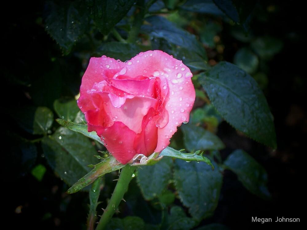 Pretty Pink Rose by Megan  Johnson