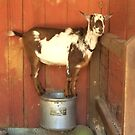 Goofy Goat by Hickoryhill