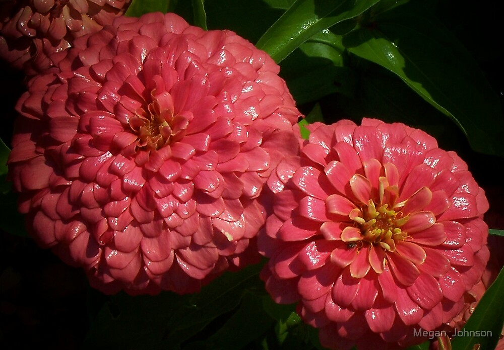 Two in Pink by Megan  Johnson