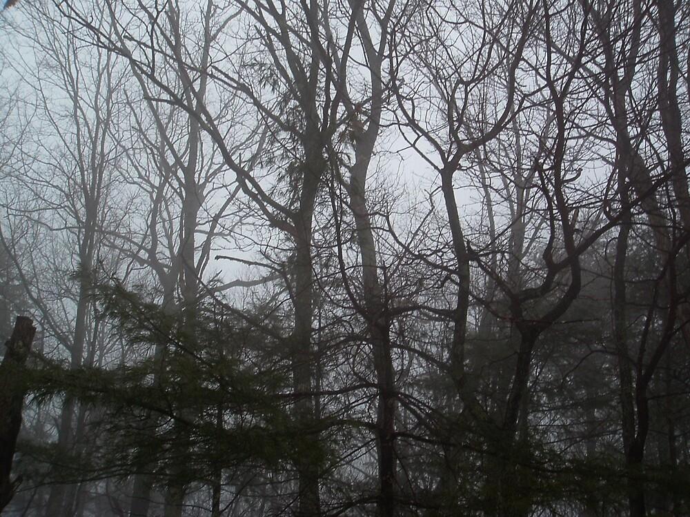 foggy night by blackwhitelif3