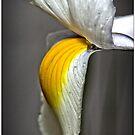 Flower (macro) by Wolf Sverak