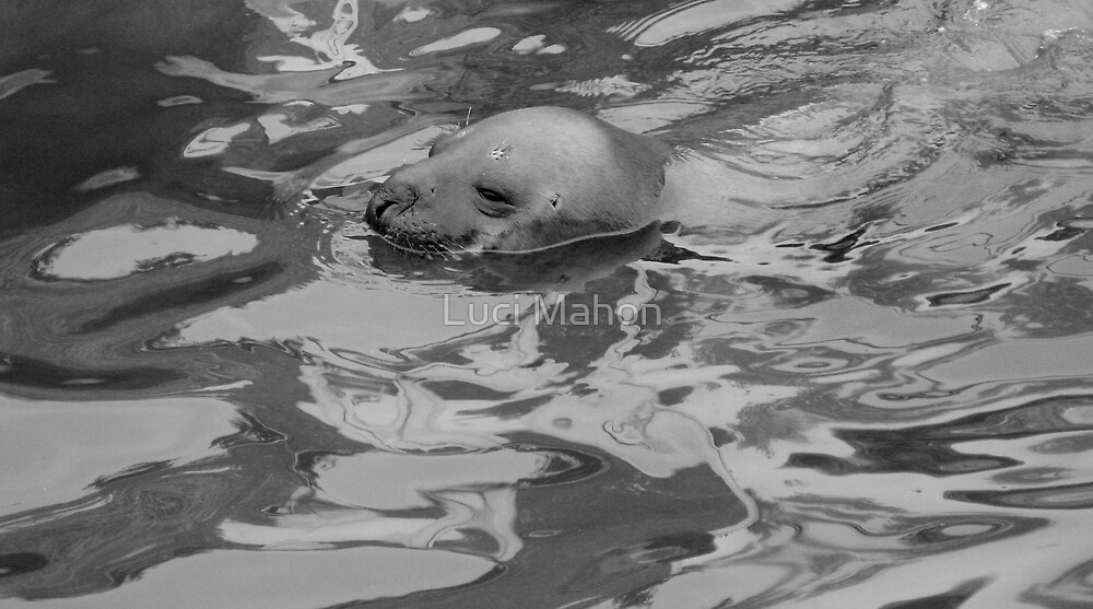 Seal by Luci Mahon