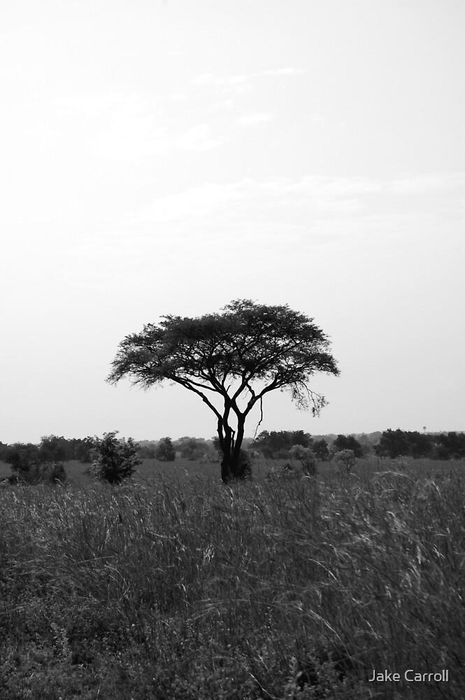 Tree by Jake Carroll
