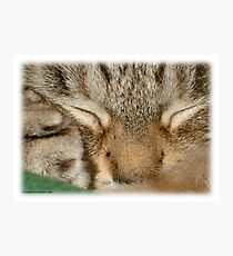 Sleepy Kitty Photographic Print