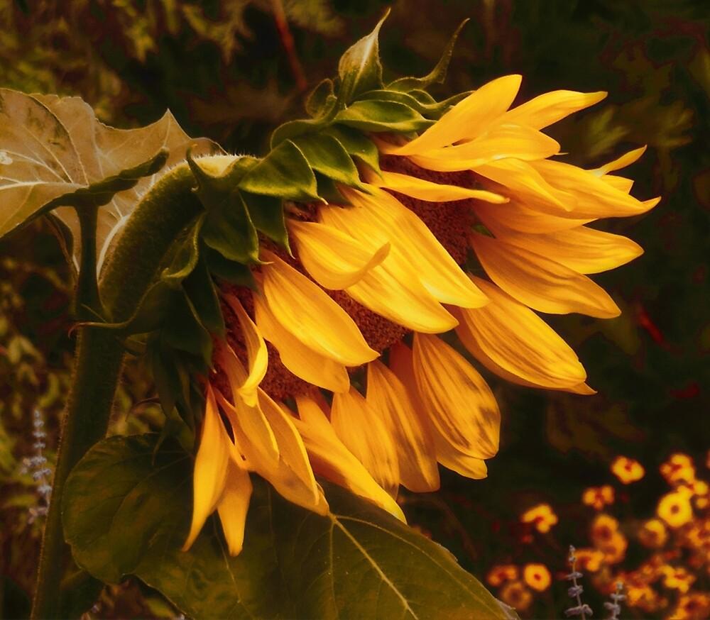 Sunflower 5am Wakeup Call by moorezart