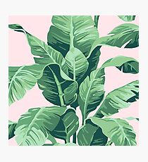 Beverly Hills Palm Leaf Banana Print Pink Photographic Print