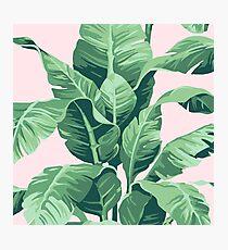 Beverly Hills Palm Leaf Banana Print Pink Photographic Print