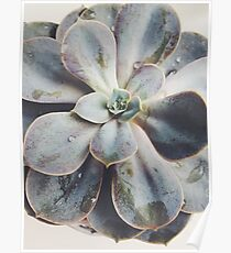 succulant  Poster