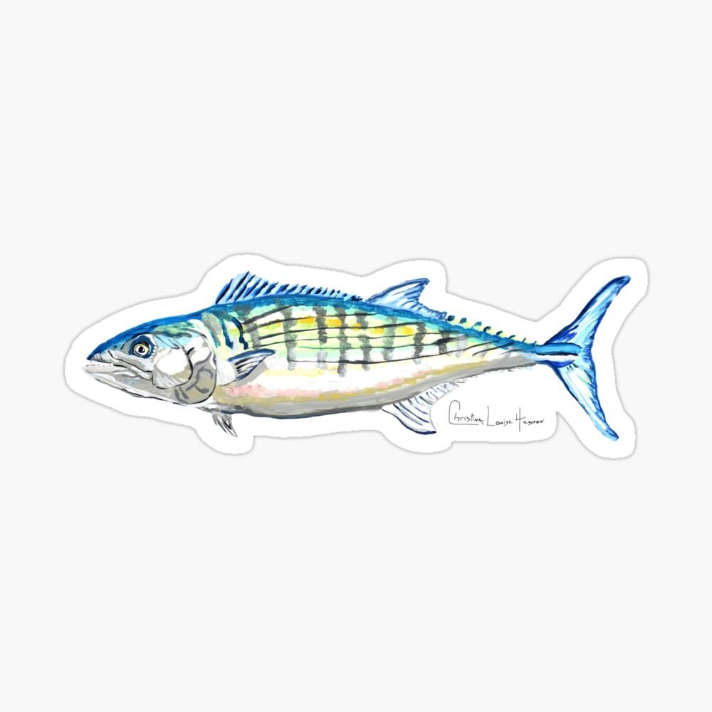 Atlantic Bonito Sticker