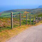 Der Große Orme, Llandudno, Wales von trish725