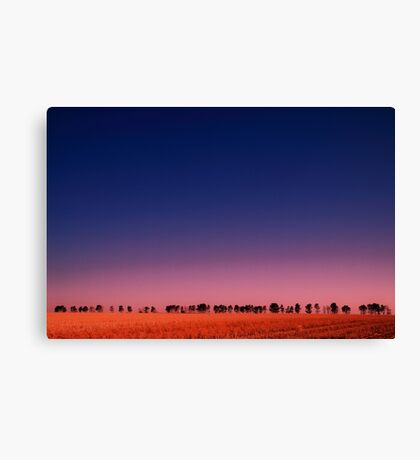 Windbreak at dusk Canvas Print