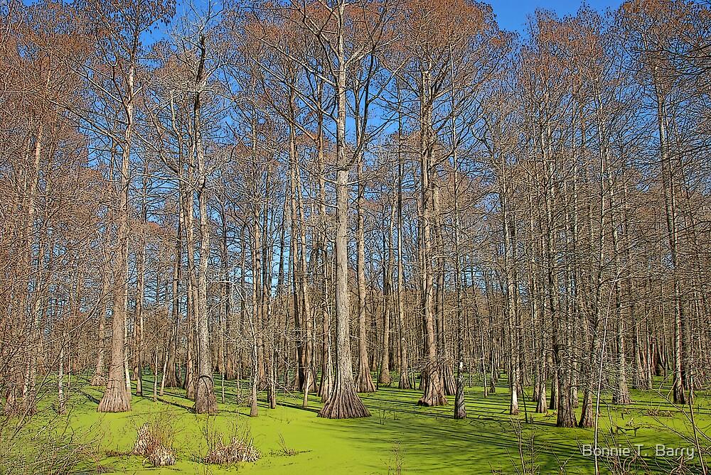 Cypress Swamp by Bonnie T.  Barry