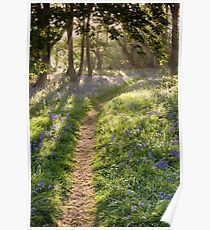 Long path through bluebell woodland beautiful sunrise Poster