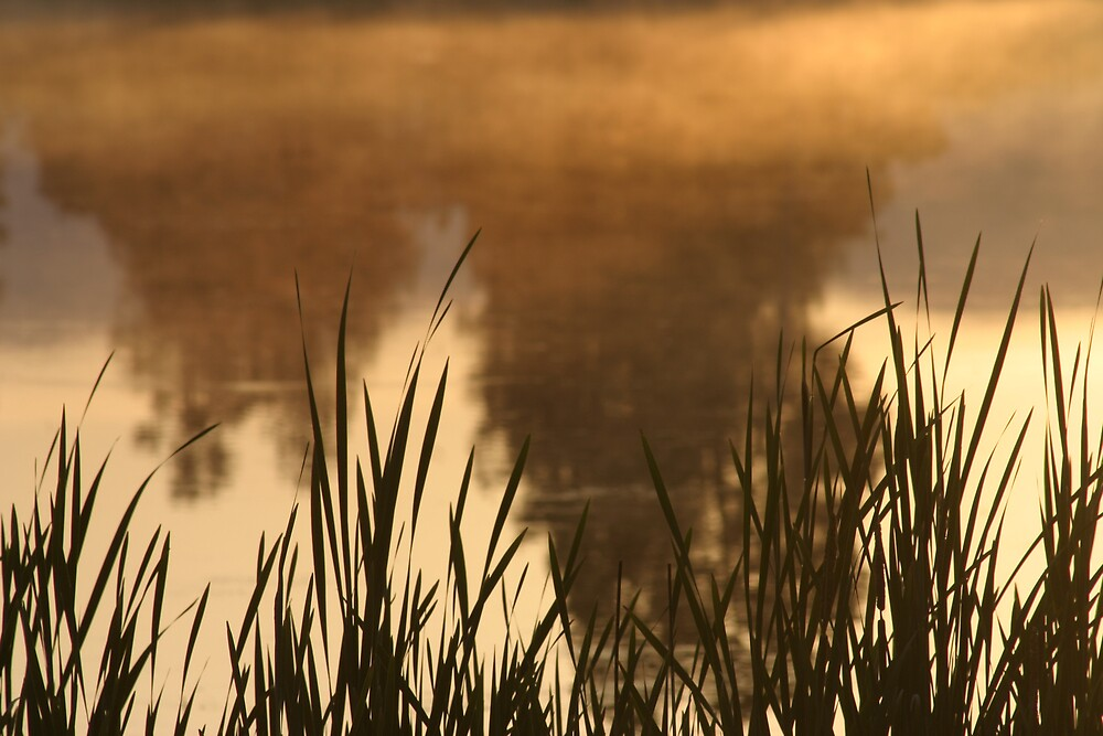 Morning Mist by Jessica Lynn
