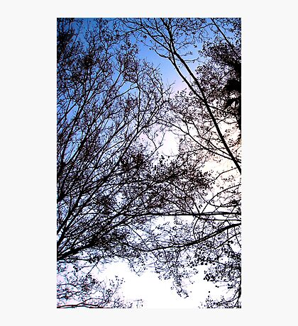 Tree Friends Touch Photographic Print