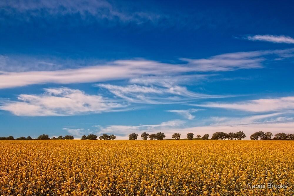 Canola fields by Naomi Brooks