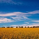Canola fields by Naomi Brooks