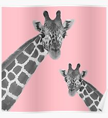 Giraffe Rosa Poster