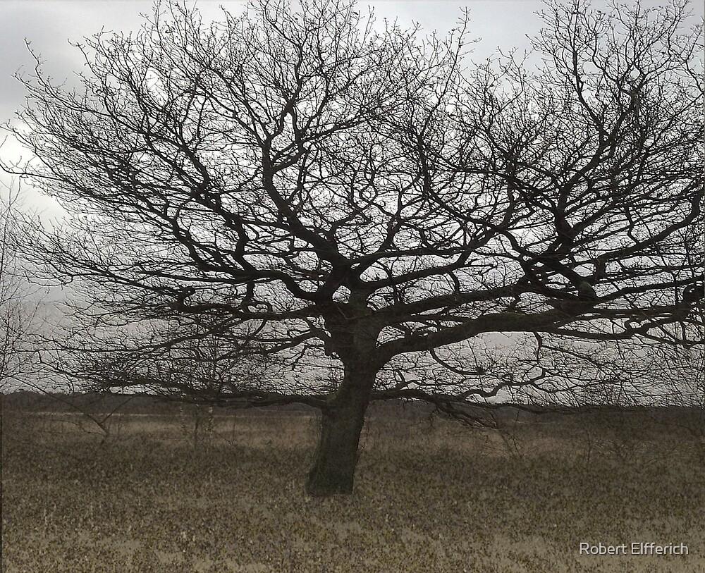 Tree by Robert Elfferich