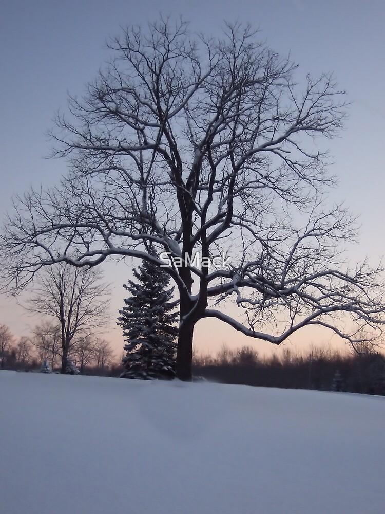 Lone Tree by SaMack