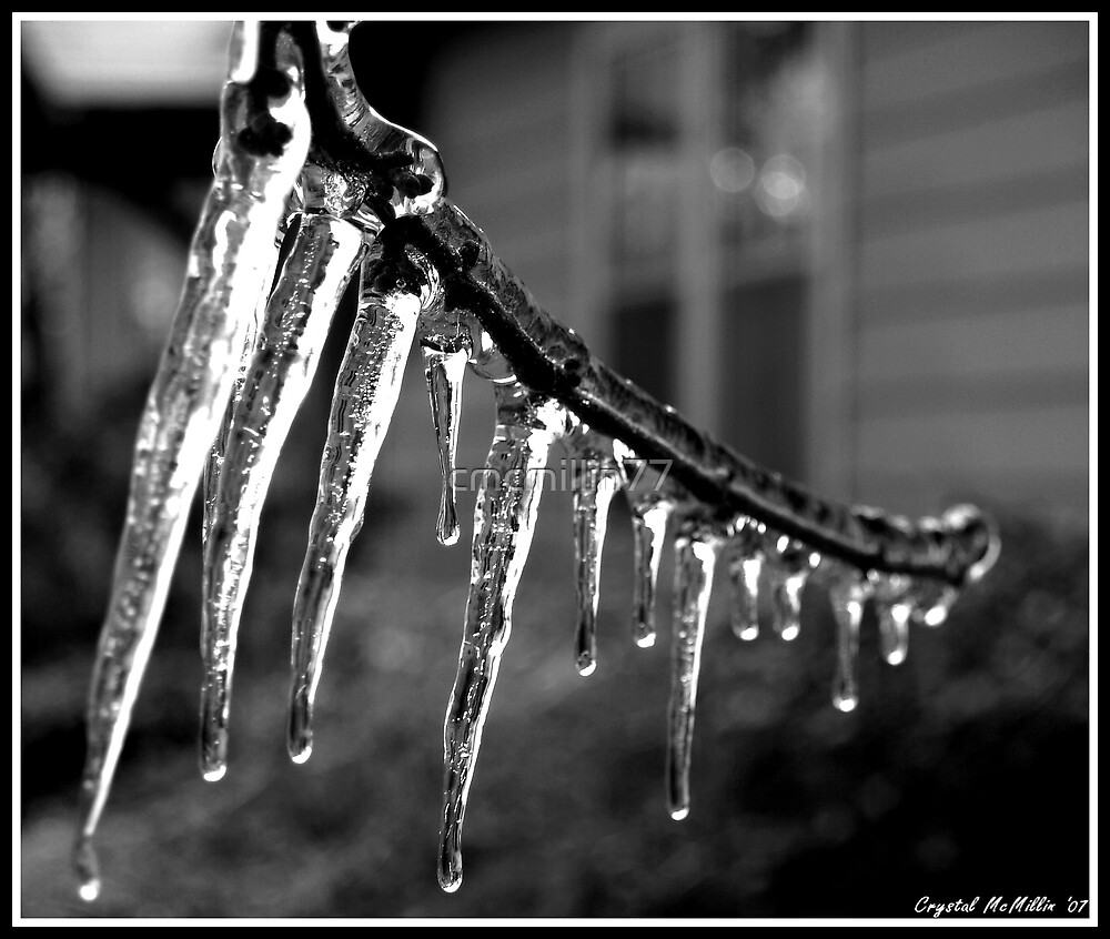 Icy Limb by cmcmillin77