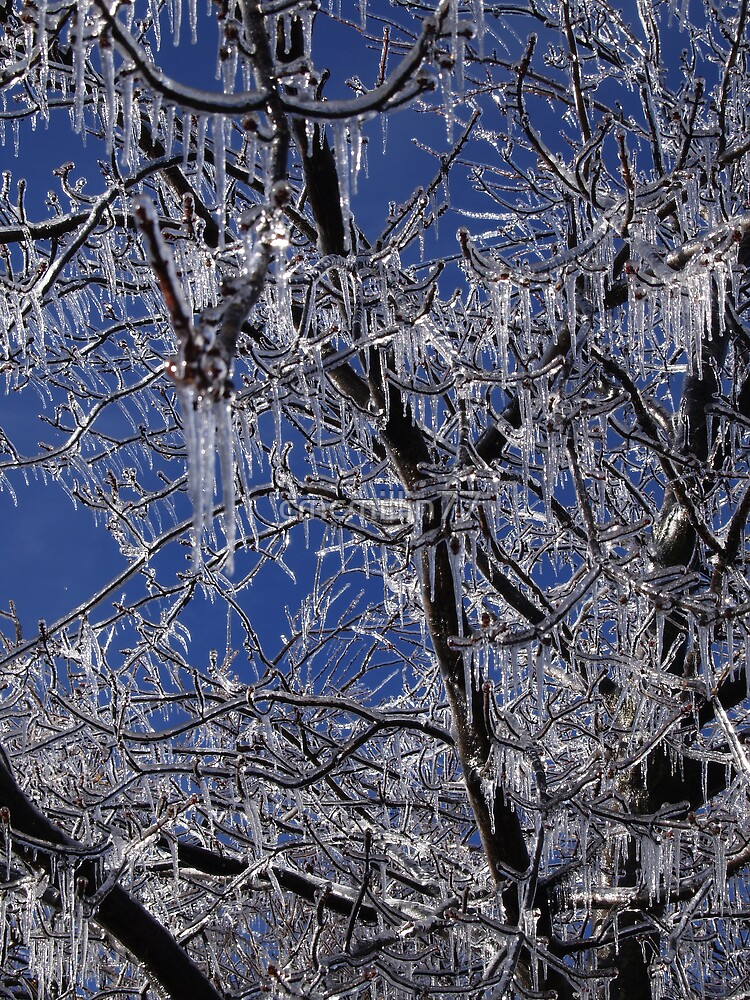 Ice Covered Tree by cmcmillin77