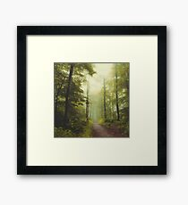 Long Forest Walk Framed Print