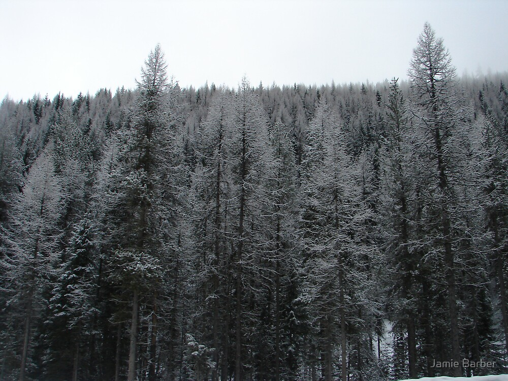 Montana by Jamie Barber